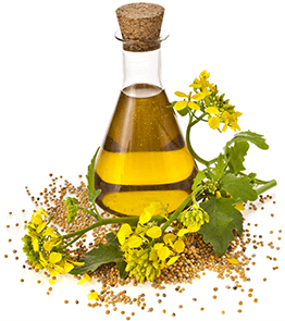 Benefits Canola Oil Hair