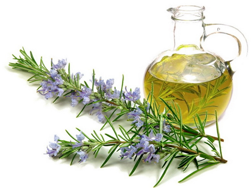 Benefits of Rosemary Oil for Hair Growth | How to prepare hair masks